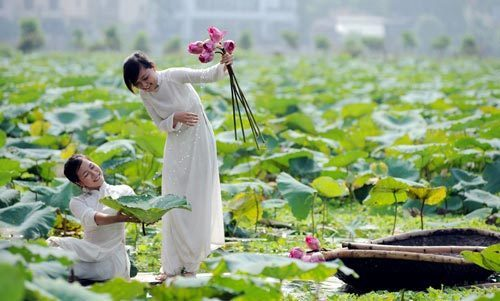 Lotus ponds around West Lake