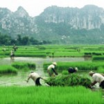 Ninh Binh 3-day tour: Suggestions for countryside outing